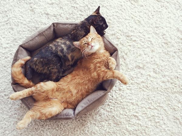 رؤية القطط في المنام والخوف منها نواعم