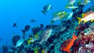 ماذا تعني رؤية السمك في الحلم؟